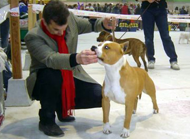 Exposition Internationale Paris Dog Show - Vincenne