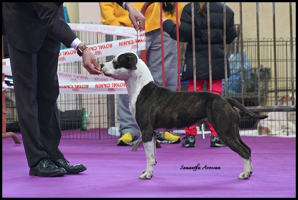 Informations concernant nos participations aux Expositions Canines