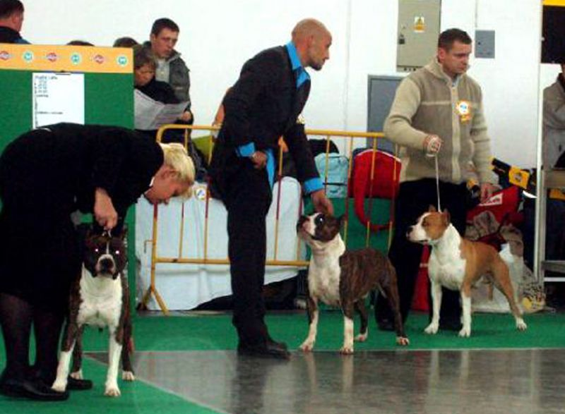 Exposition Internationale Championnat du Monde World Dog Show - Poznan Pologne