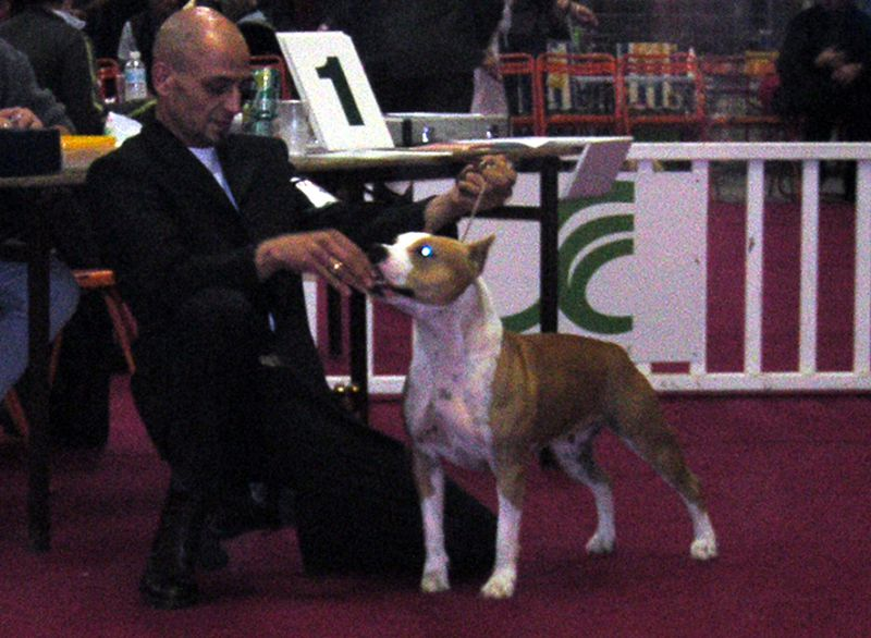 Exposition Internationale Championnat d'Europe Euro Dog Show - Barcelone Espagne